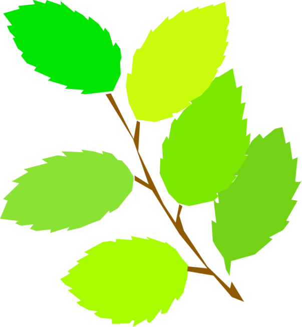 tom-simple-spring-new-leaves-800px